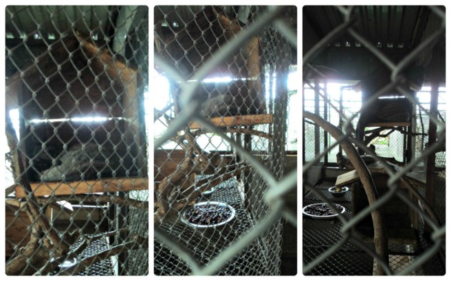 Chồn trốn trong chuồng :)