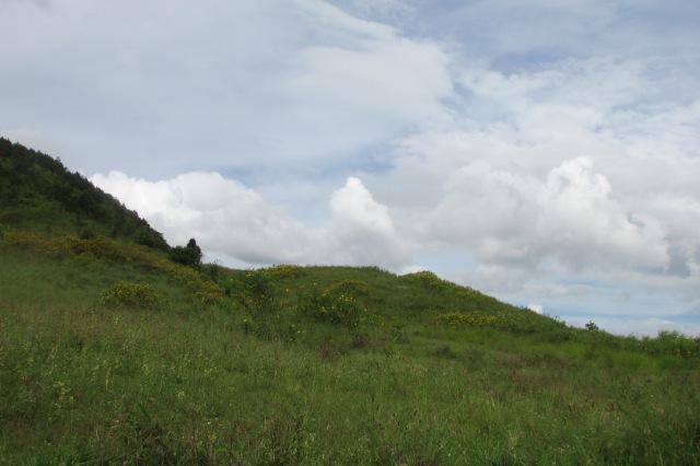 Dã quỳ trên đồi